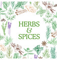 spices and herbs sketch seasonings vector image vector image