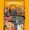 tequila and other agave drink production process vector image