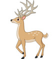 cute deer cartoon isolated on white background vector image vector image