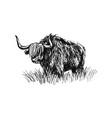 hand sketch bull vector image