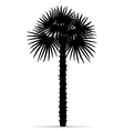 palm tree silhouette 01 vector image vector image