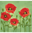 Floral vintage background with flowers poppies vector image