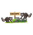 racoons at the zoo sign vector image vector image