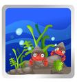 a hermit crab underwater backgroun vector image vector image