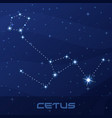 constellation cetus whale sea monster night sky vector image vector image