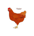 chicken hand drawn chicken meat vintage produce vector image vector image