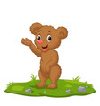 cute babear waving hand on grass vector image vector image