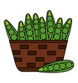 wicker basket with fresh peas bean vector image