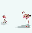 painted flamingo bird - vector image