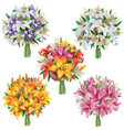 Set of lilies bouquets vector image vector image