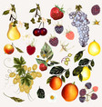 mega pack of fruits and berries vector image