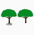 tree with root and leaf crown vector image