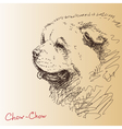 Chow-chow dog vector image