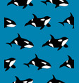 seamless pattern of hand drawn killer whale vector image