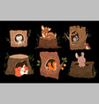 set 6 adorable forest animals in or on tree vector image