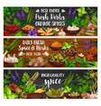spices culinary herbs and vegetable seasonings vector image vector image