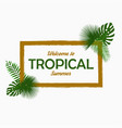 tropical card design with - palm leaves vector image vector image