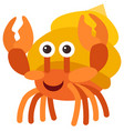 hermit crab on white background vector image