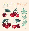 summer set with sweet cherries leaves and flowers vector image vector image