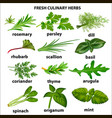 a set of culinary herbs for a restaurant vector image