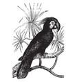 black cockatoo vintage vector image vector image