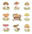 Eatable Mushrooms Realistic Drawings Set vector image