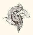 mountain bighorn sheep vector image vector image