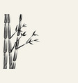 sketch of bamboo tree vector image vector image