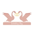Wedding pink swans hold rings over white vector image vector image