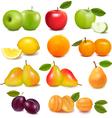 fresh fruit vector image