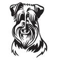 image schnauzer dog on white background vector image