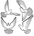 Black and white contours of four pigeons that fly vector image