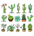 home cactus plants with prickles and nature vector image