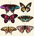 realistic butterflies for design vector image vector image