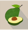 avocado isolated flat style vector image