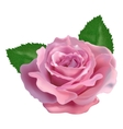 realistic rose on a white background vector image vector image