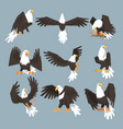 bald eagle an image set hunting on gray background vector image vector image