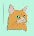 cat portrait vector image vector image