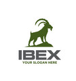 ibex solution care logo designs simple modern vector image vector image