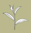 hand drawn tea leaf side view sketch vector image vector image