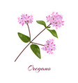 blossoming oregano flowers vector image vector image