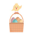 eggs painted in basket with little chick happy vector image vector image