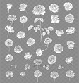 rose drawing set isolated on transparent vector image vector image