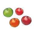 Set of apples isolated on white background vector image vector image