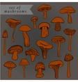 Vintage set of different hand drawn mushrooms in vector image vector image