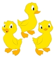 Cartoon Ducklings vector image vector image