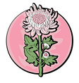 chrysanthemum clip art vector image vector image