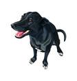 dog created crossing labrador retriever vector image