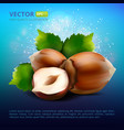 hazelnuts with leaves on colorful vector image