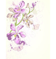 violet orchids vector image vector image